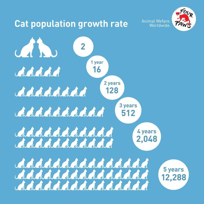 Stray cat population