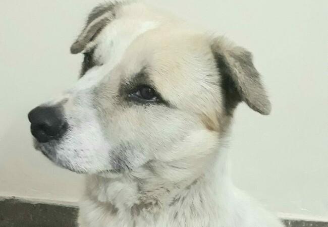 Animal Charity - Dog