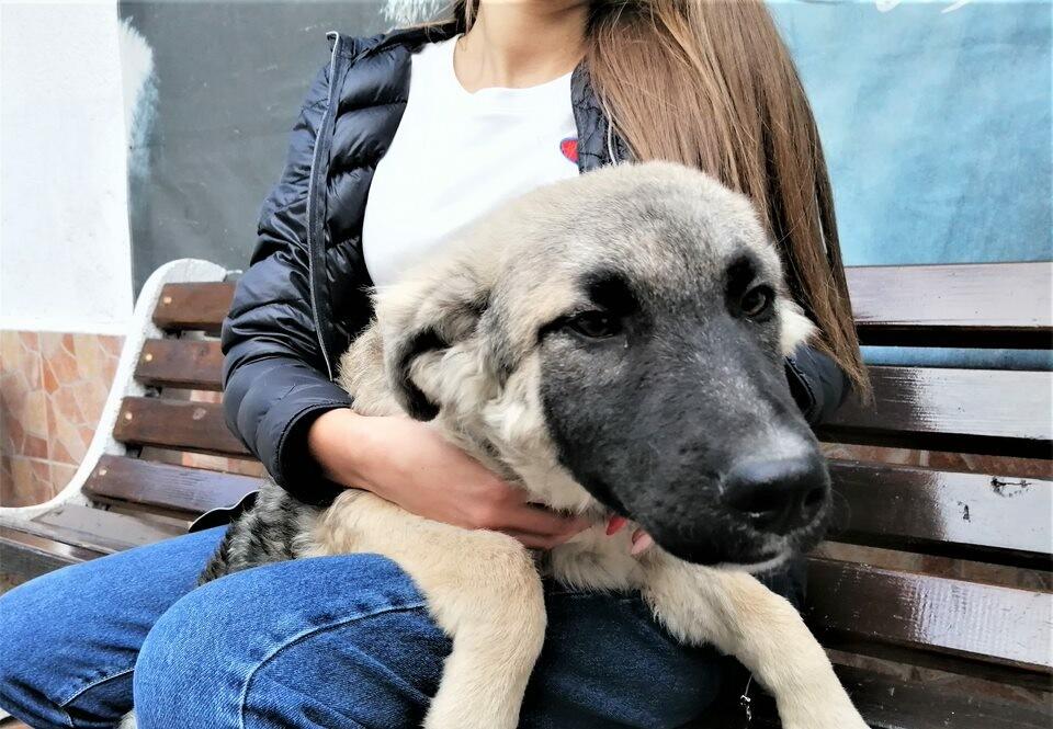 Dog Tutsy | куче Тутси