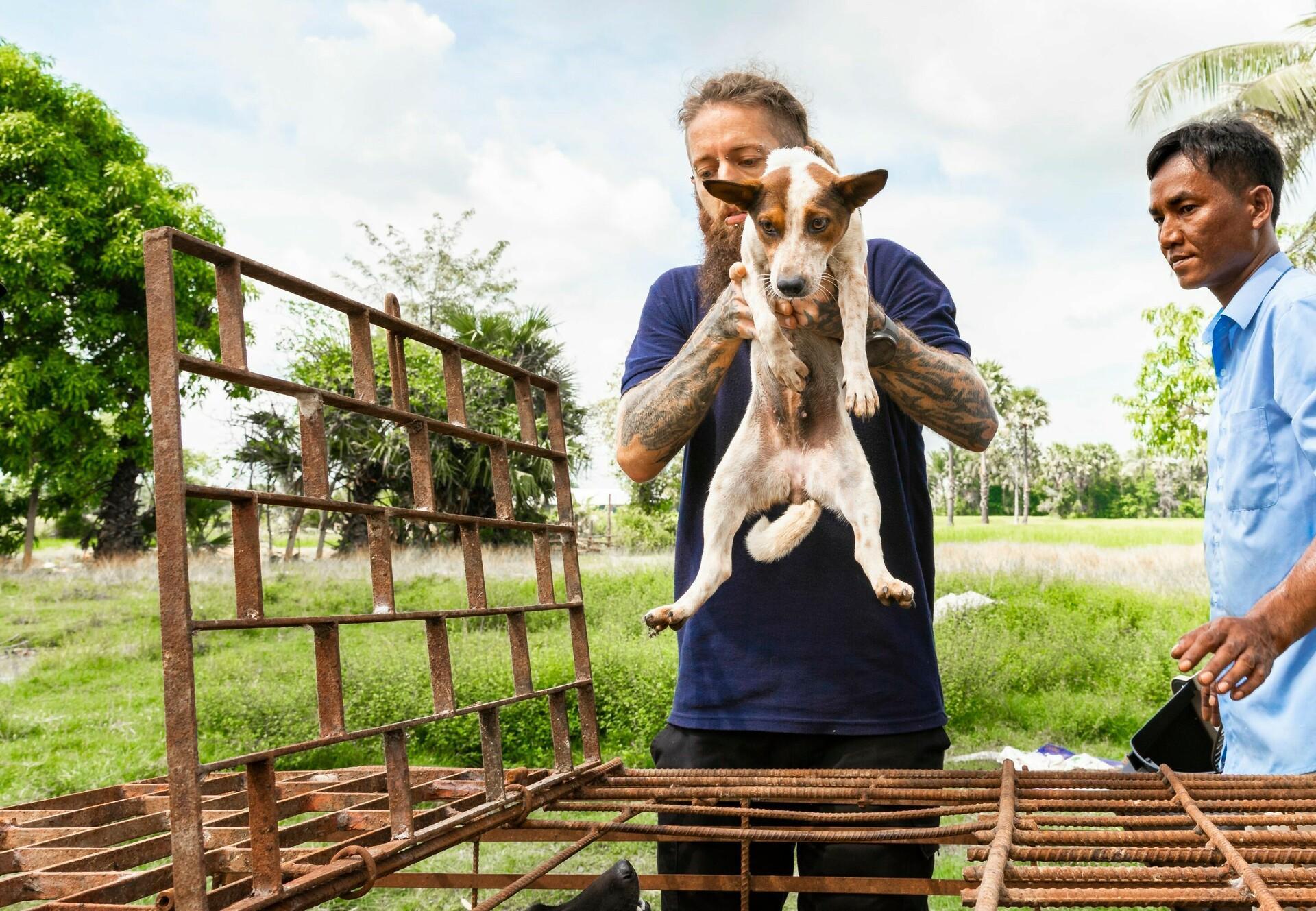 A Slaughterhouse Shutdown in Cambodia