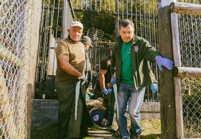 Das VIER PFOTEN Team befreite die leidgeprüften Bären und brachte sie in den BÄRENWALD Domazhyr