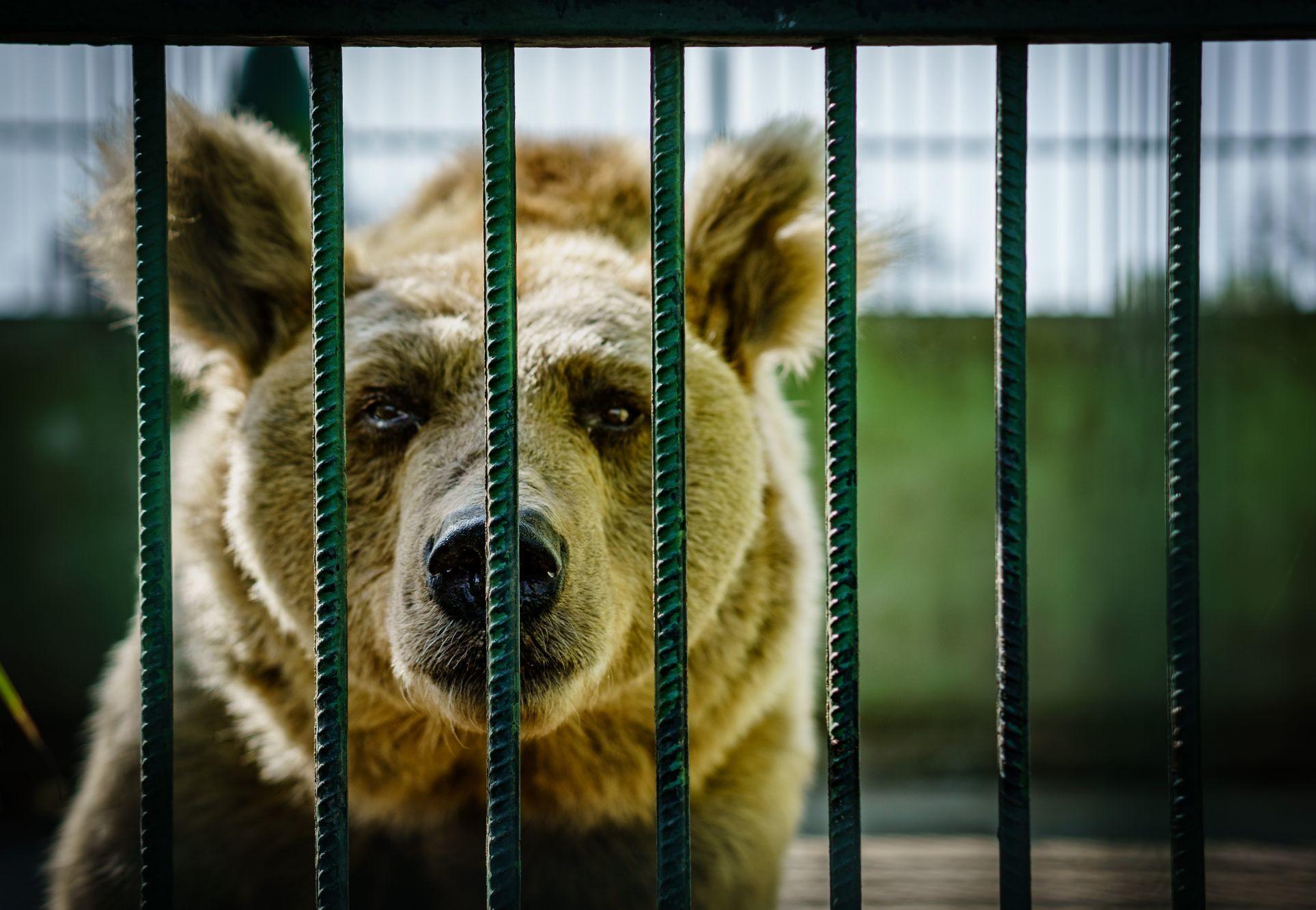 Bär im Käfig in Kroatien