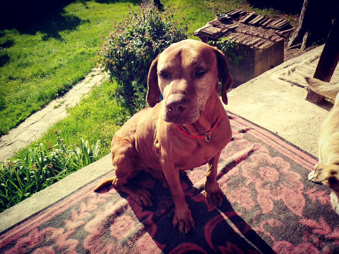dog-grass-carpet