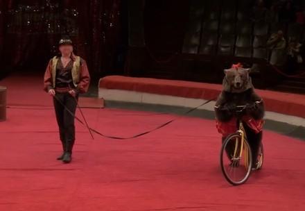 QUATRE PATTES, ProTier et Tier im Recht exigent l'interdiction de présence d'animaux sauvages dans les cirques