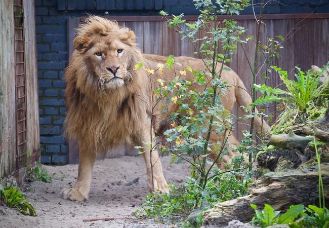 Lion Ivan-Asen in FELIDA End of 2019