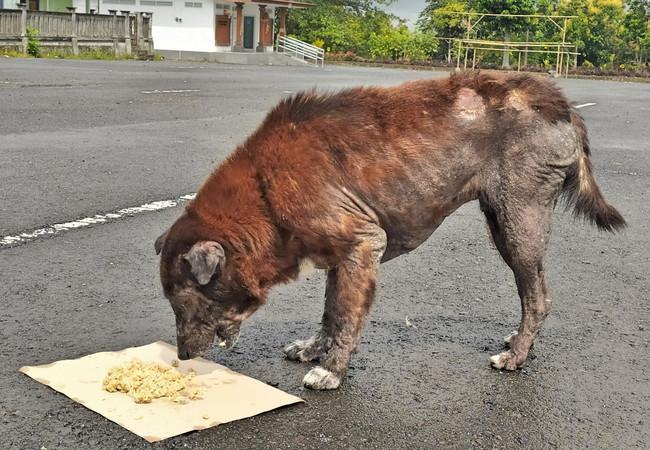 Hunde erhalten Futter