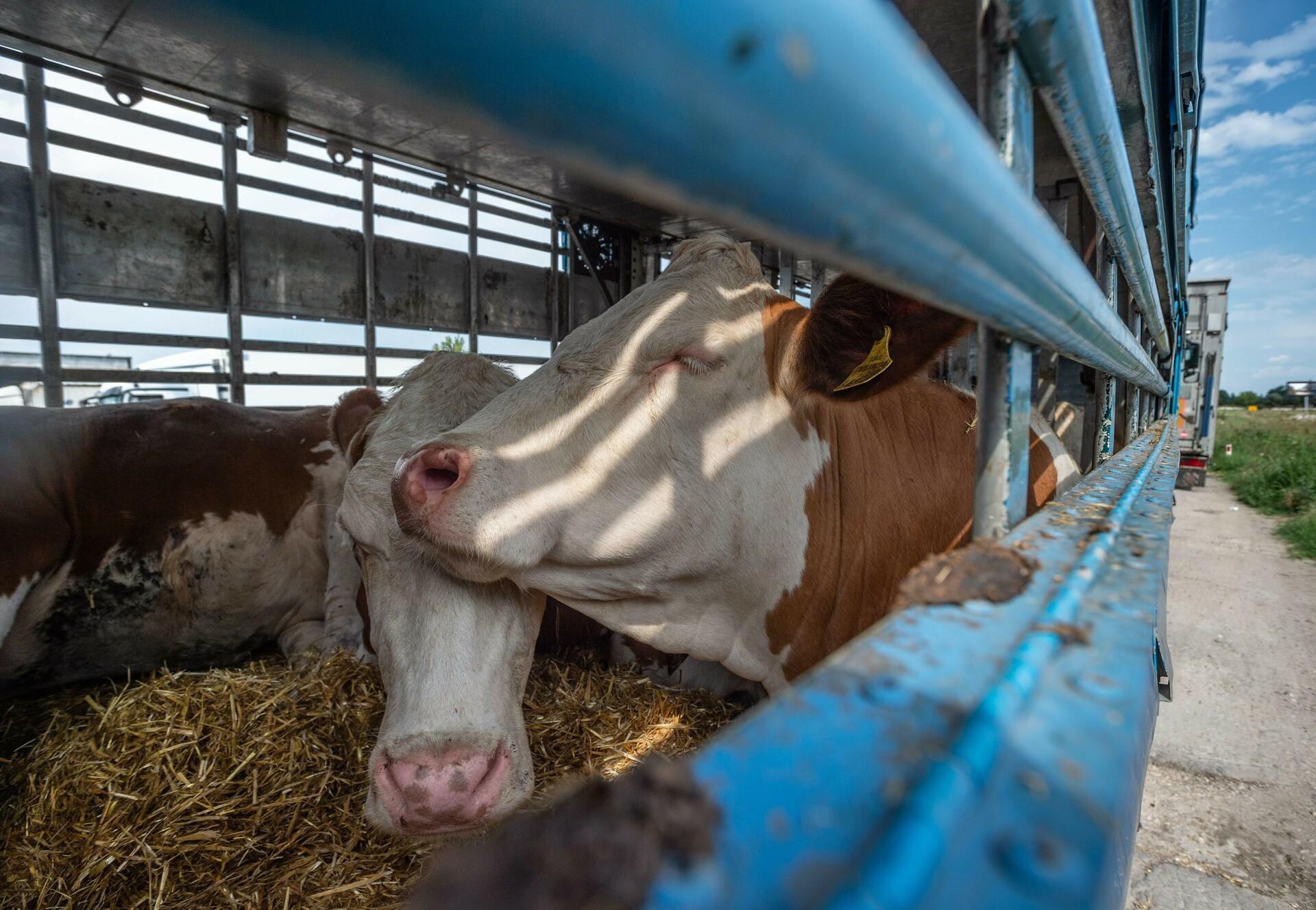 Geflügeltransport in Deutschland