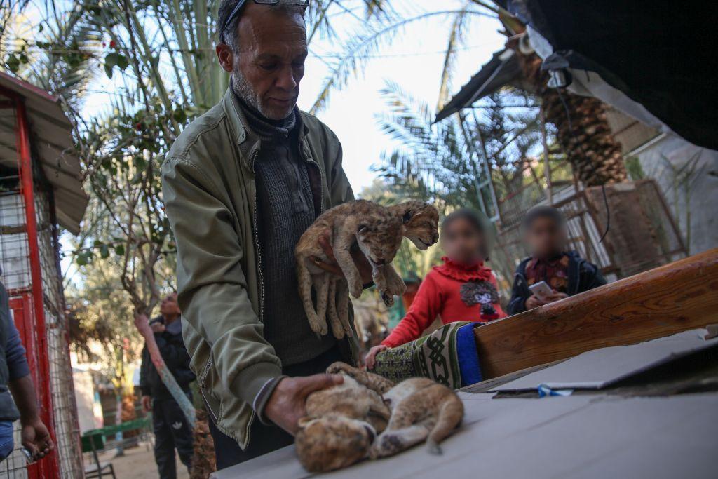 Die toten Löwenbabys (c) VIER PFOTEN