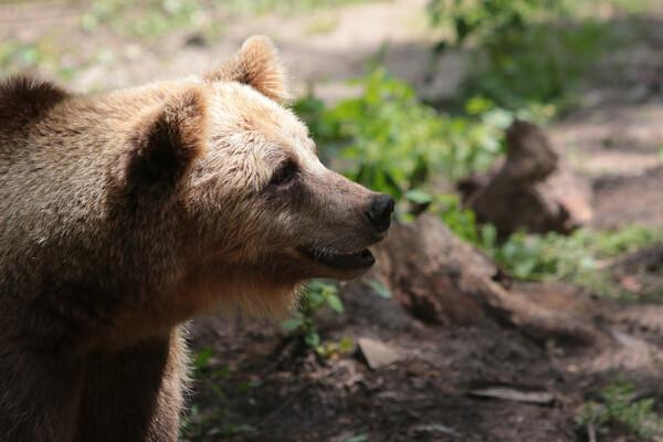 Bear at our sanctuary