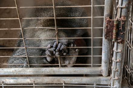 monkey-cage
