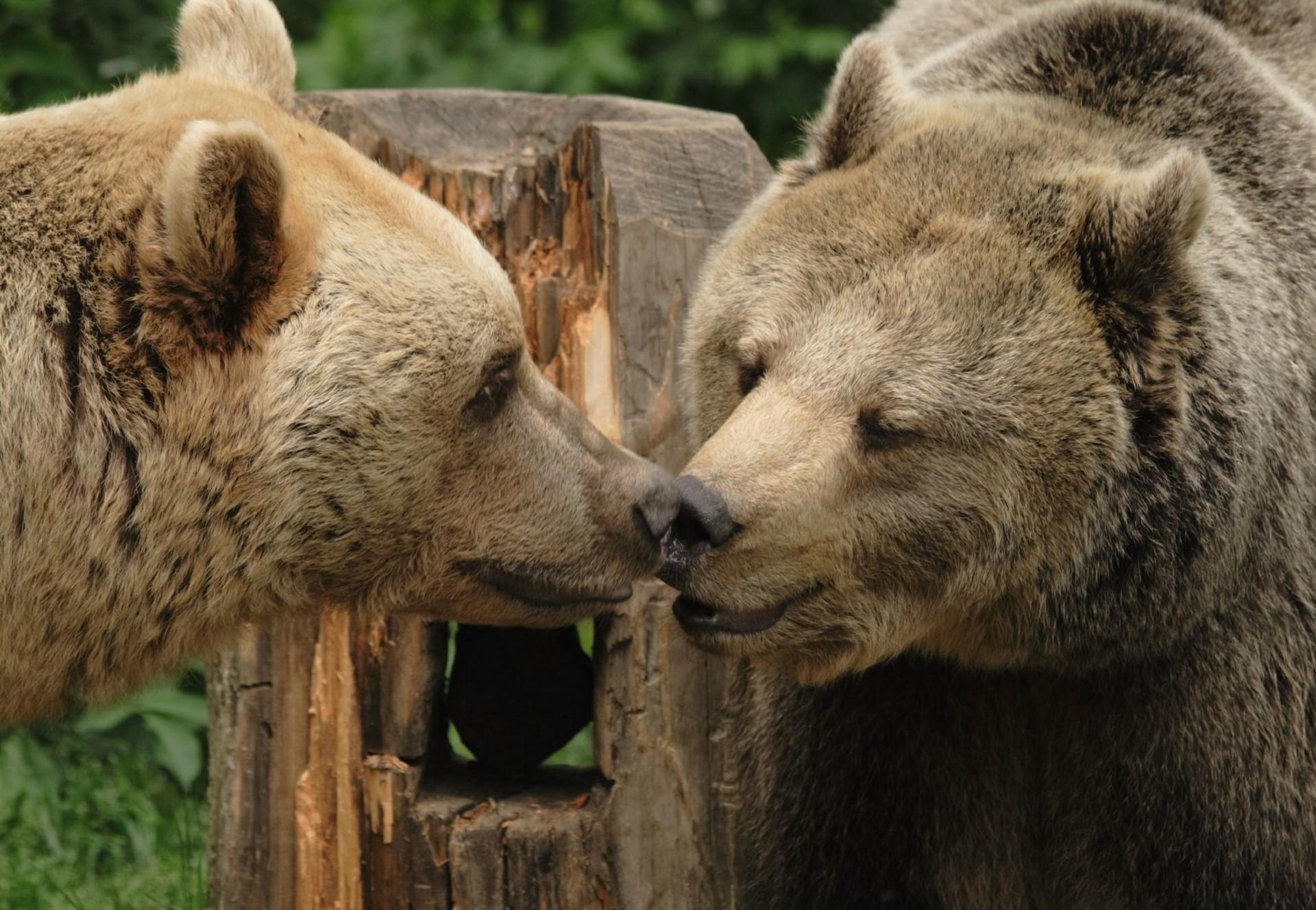 Bears at a FOUR PAWS bear sanctuary