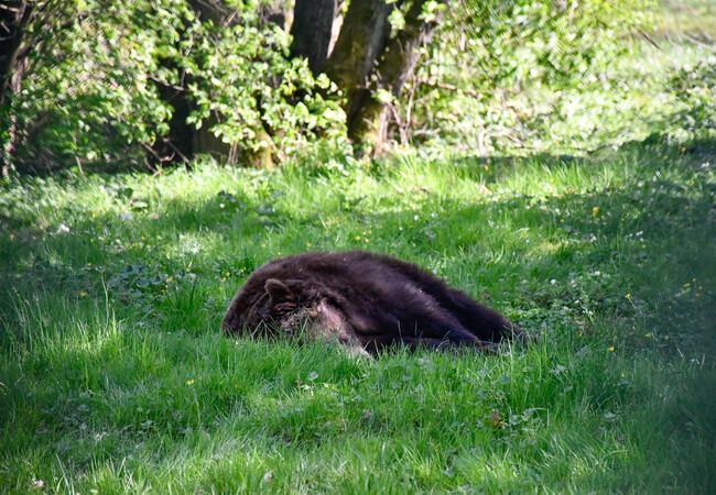 Katja ruht sich im Gras aus.