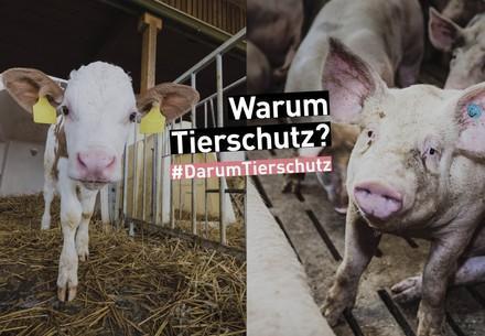 Missstände in der Nutztierhaltung