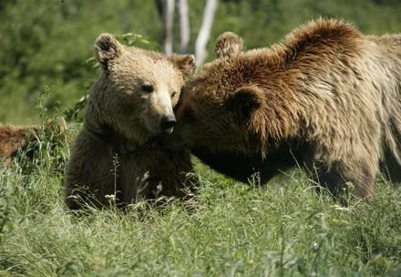 Bears happy in the sunshine