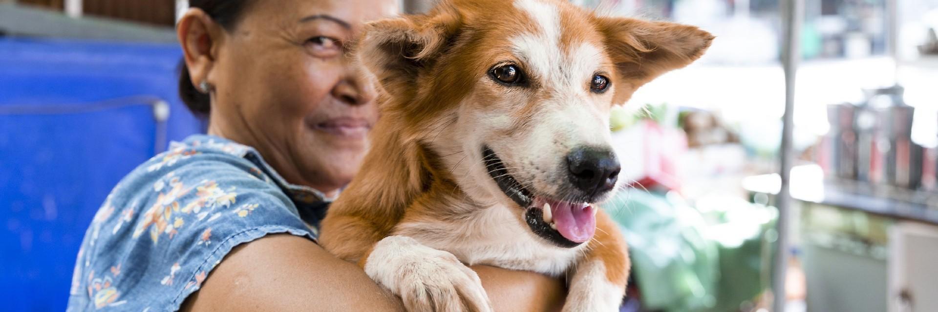 glücklicher Streunerhund