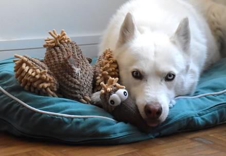 Hund Sansa mit Kuscheltier