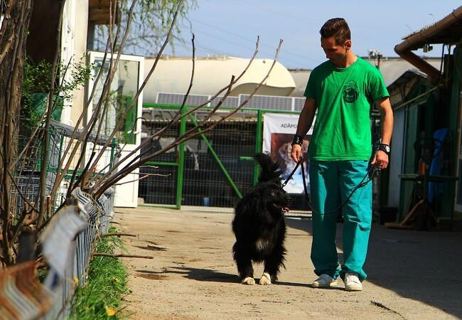 Dog Negrila when he was able to walk again