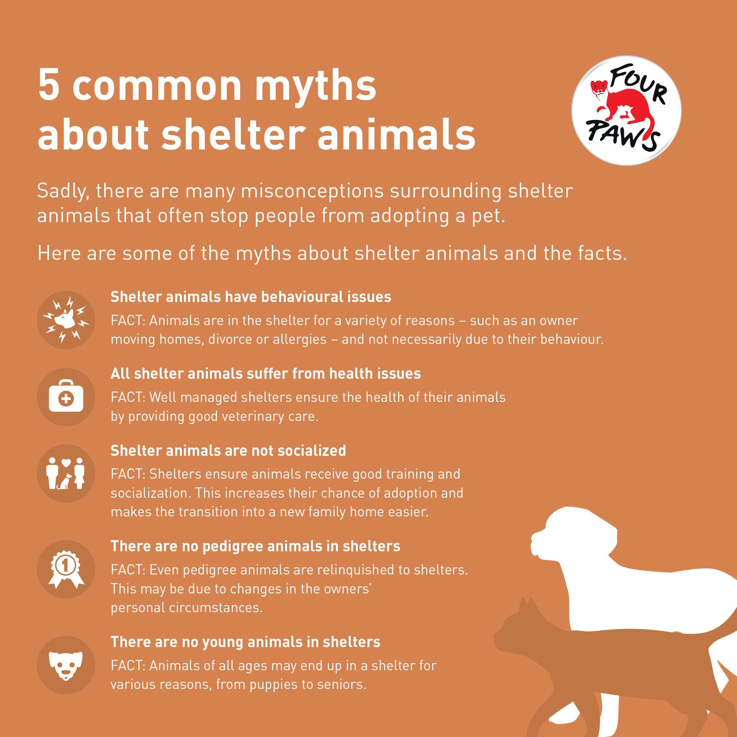 Animal shelter myths Infographic