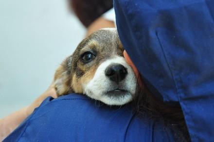 Faire un parrainage pour aider les animaux