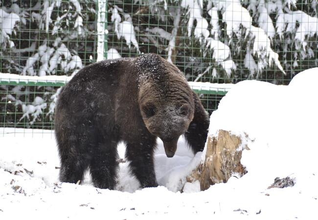Rosa at the bear sanctuary