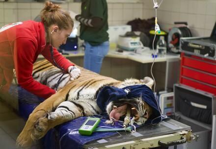 Lidewei assisteert tijdens een veterinaire controle