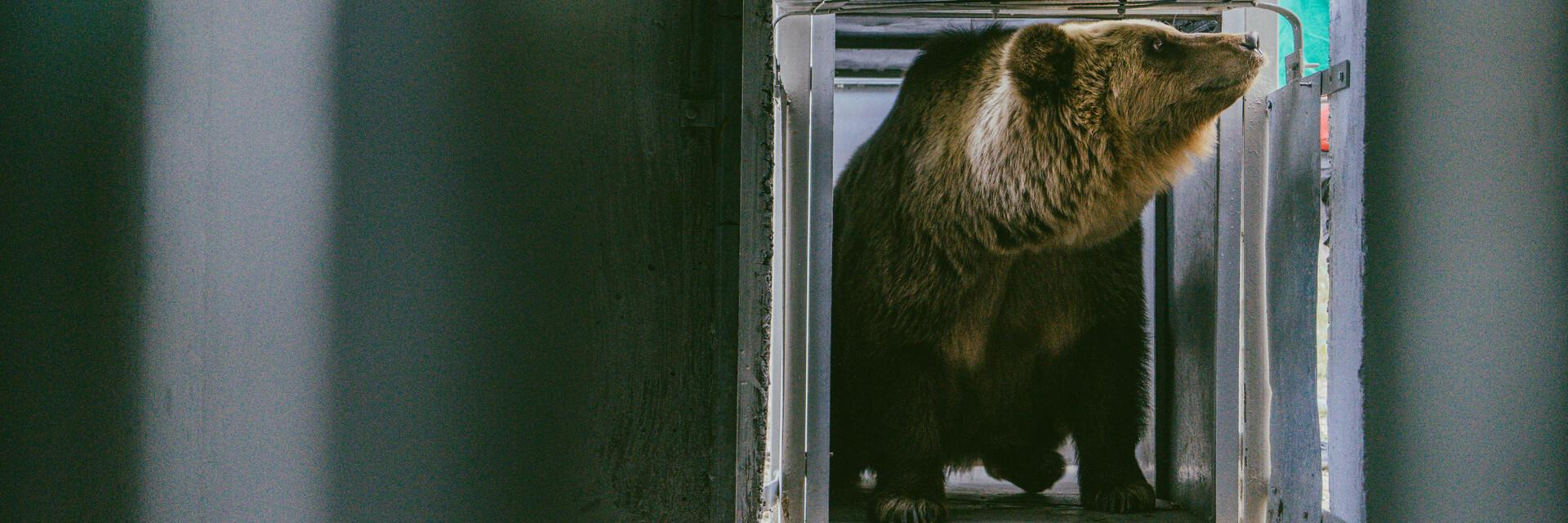 Endlich konnten wir die Bären Melanka und Leo retten