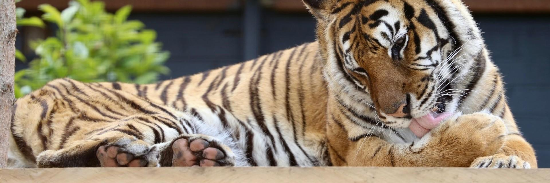Support the care of our big cats