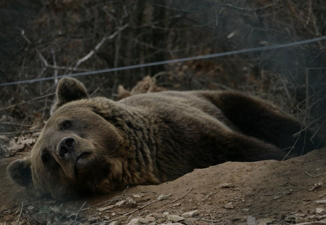 Bear Vini relaxing