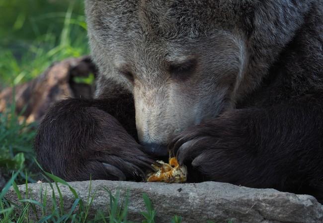 Brumca genießt einen Snack
