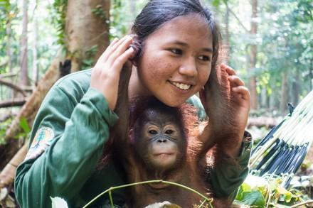 Le rôle des mères de substitution des orangs-outans orphelins