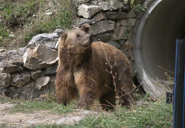 Lady M.'s erste Schritte in ein neues Bärenleben