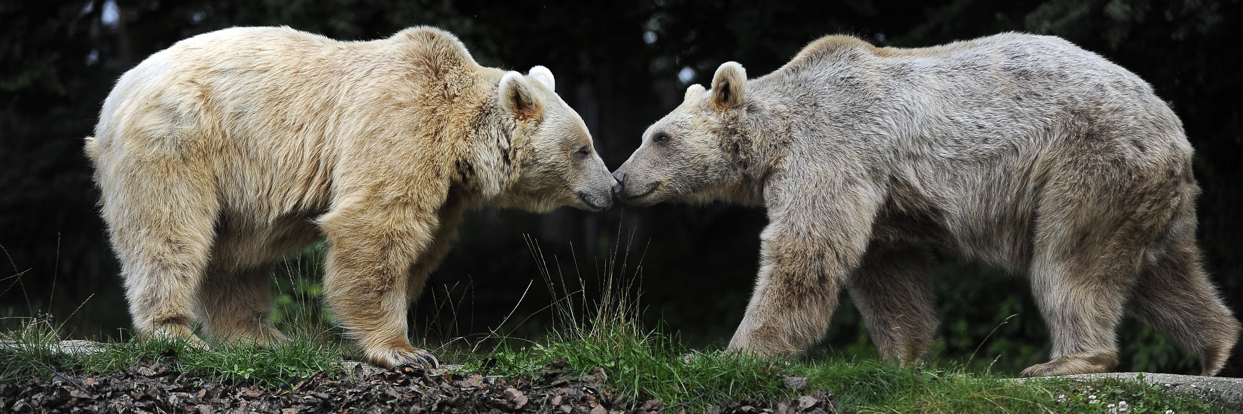 Zwei Bären im BÄRENWALD Arbesbach