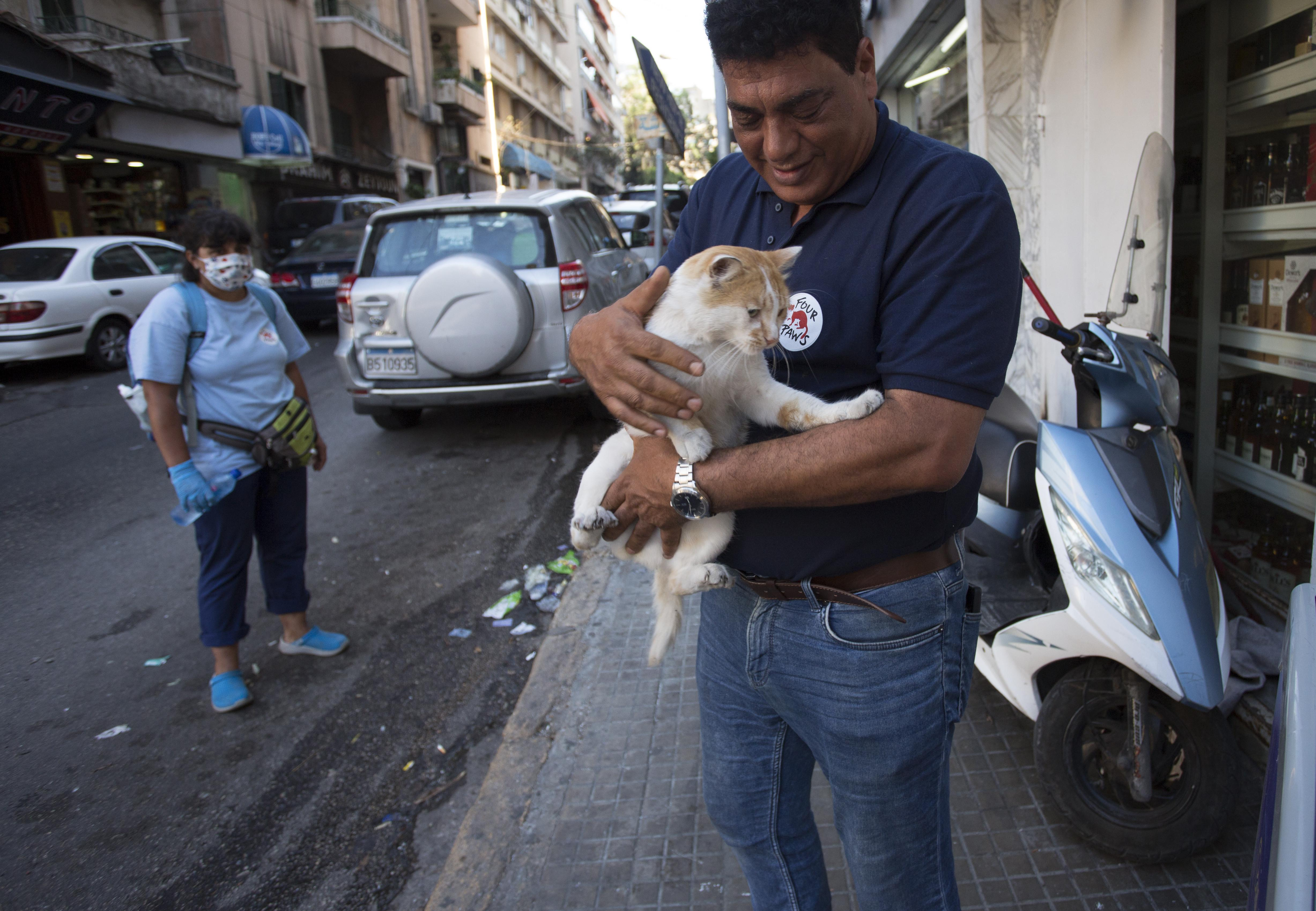 Injured and starving animals in Beirut