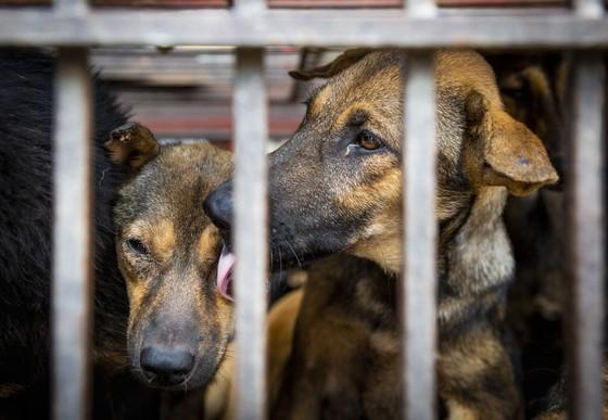 Another Indonesian regency goes dog meat free