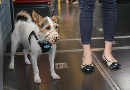 Hund in der Wiener Ubahn