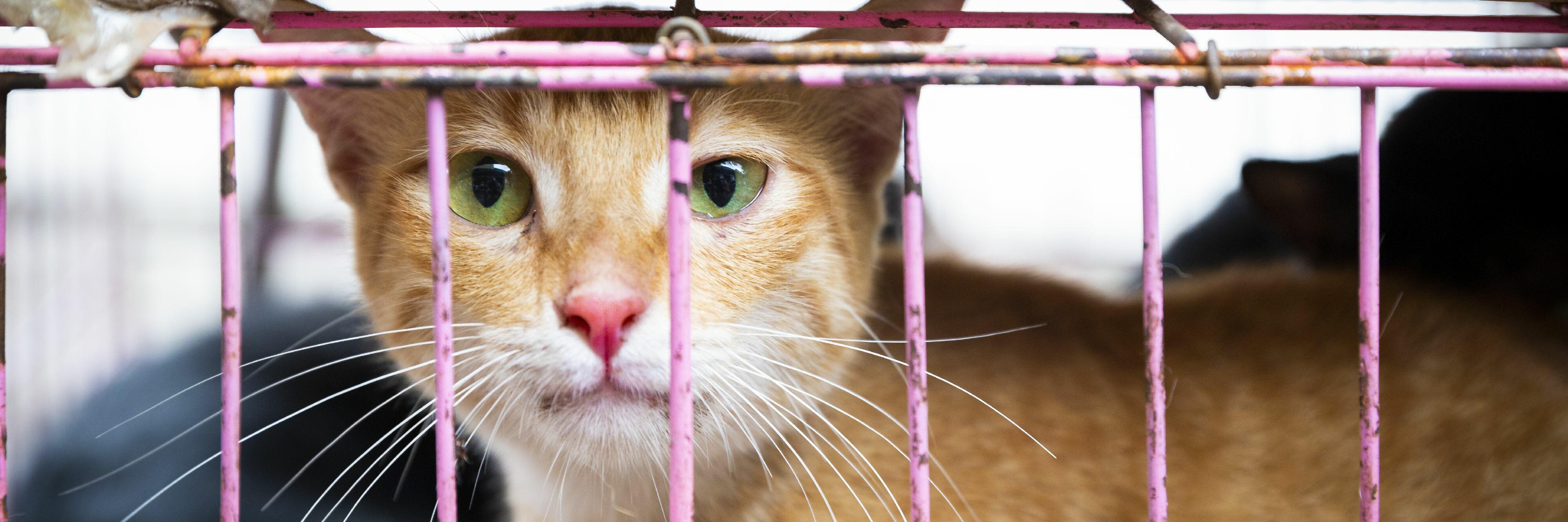 Katze im Käfig