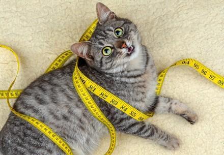 Katze mit einem Messband