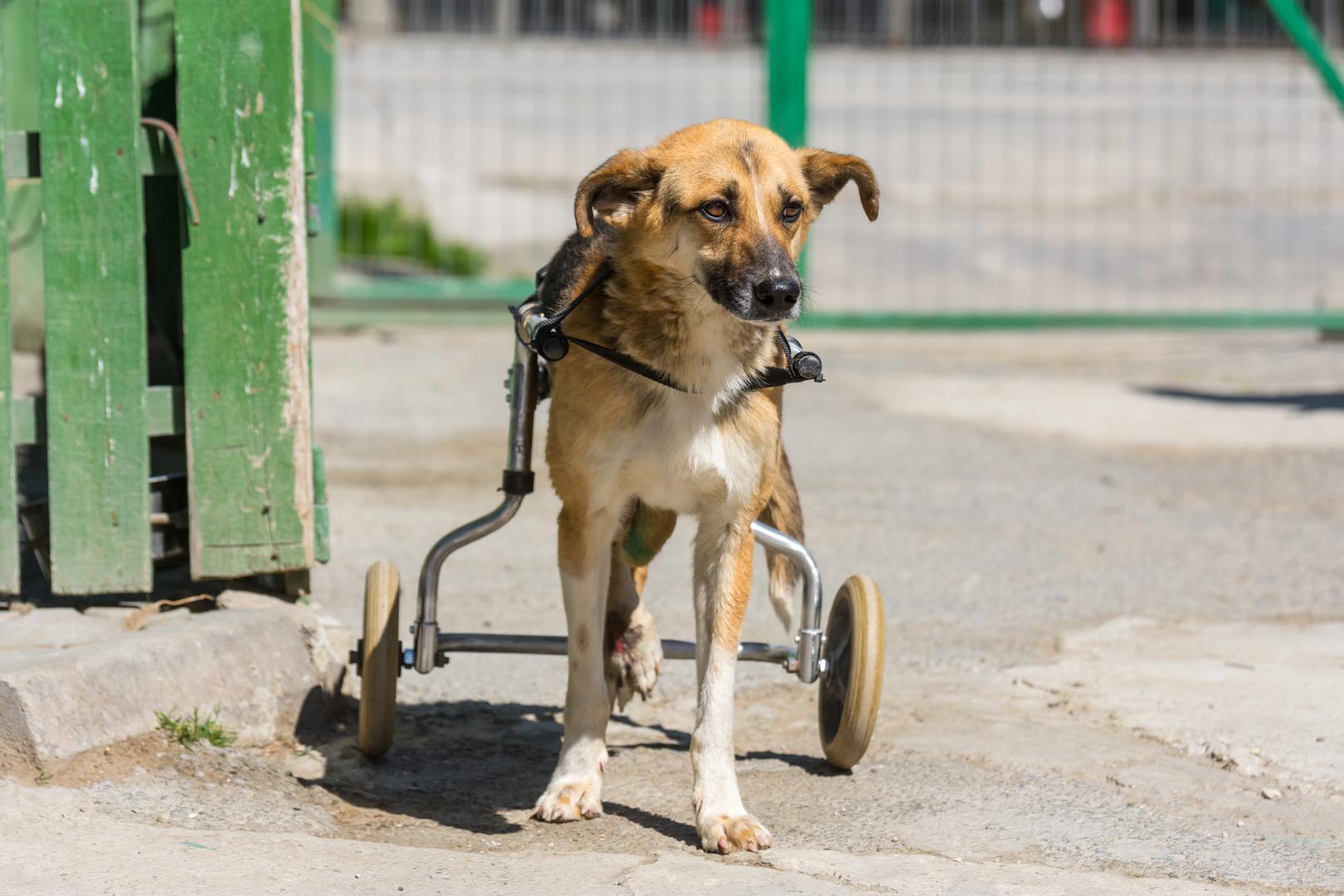 Bucur mit seinem speziellen Rollstuhl