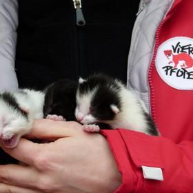 Gerettete Katzenbabys