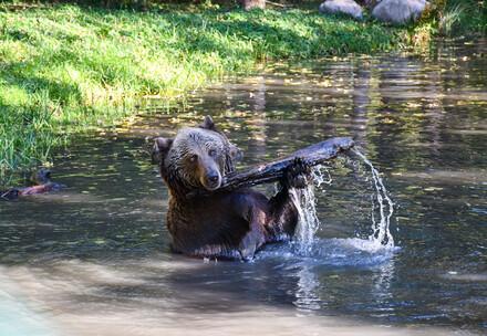Michal spielt im Wasser