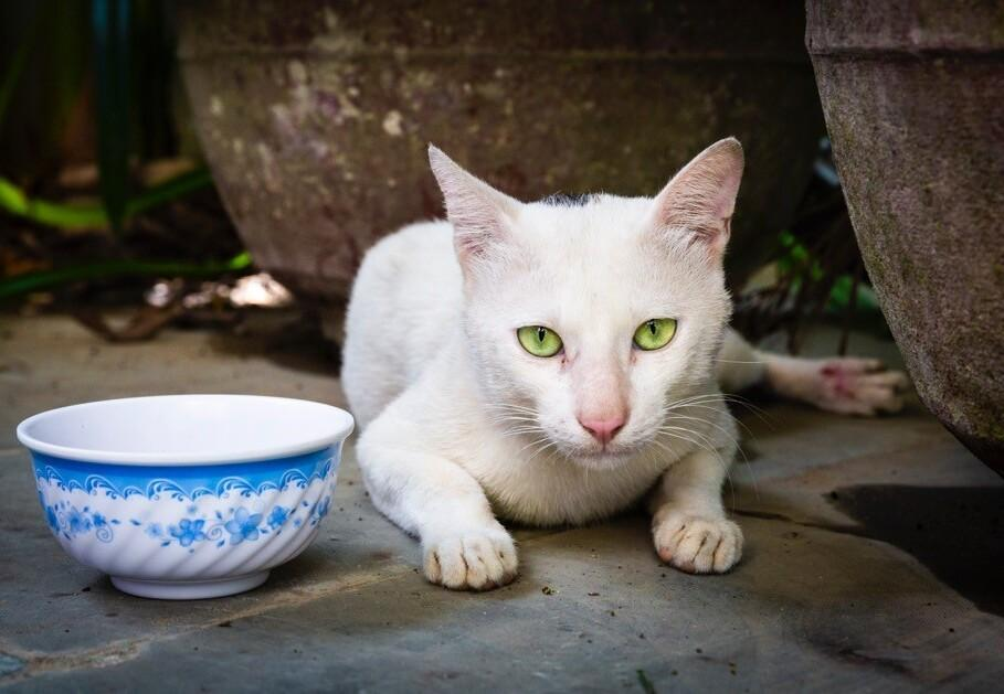 Katze Meow in Vietnam