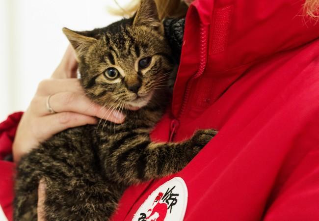 VIER PFOTEN Mitarbeiterin kümmert sich um junge Katze