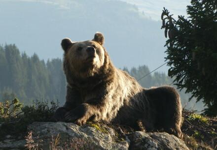 Arosa Bear Sanctuary
