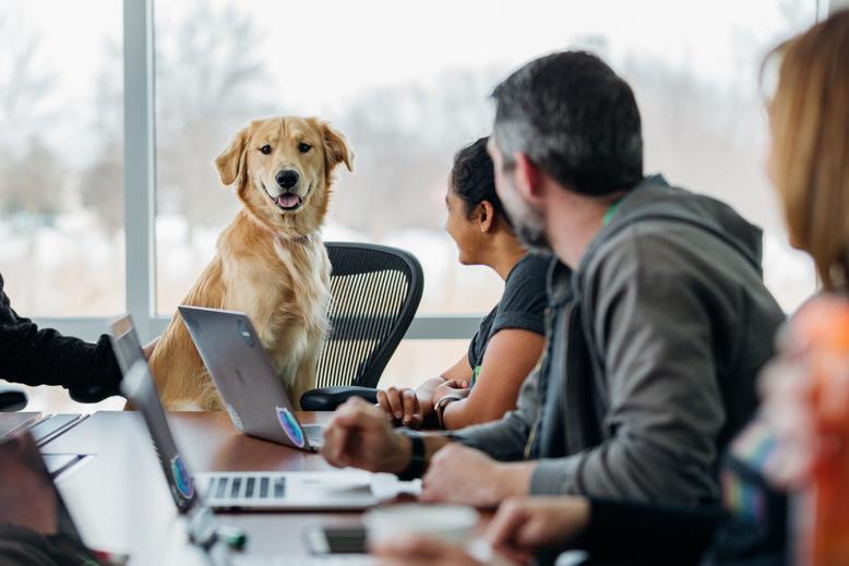 Куче сред хора в офиса