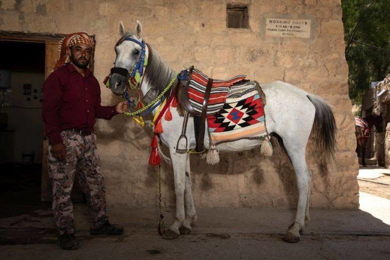 Horses Jordan
