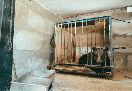 Jambolina in ihrem Käfig in der Ukraine