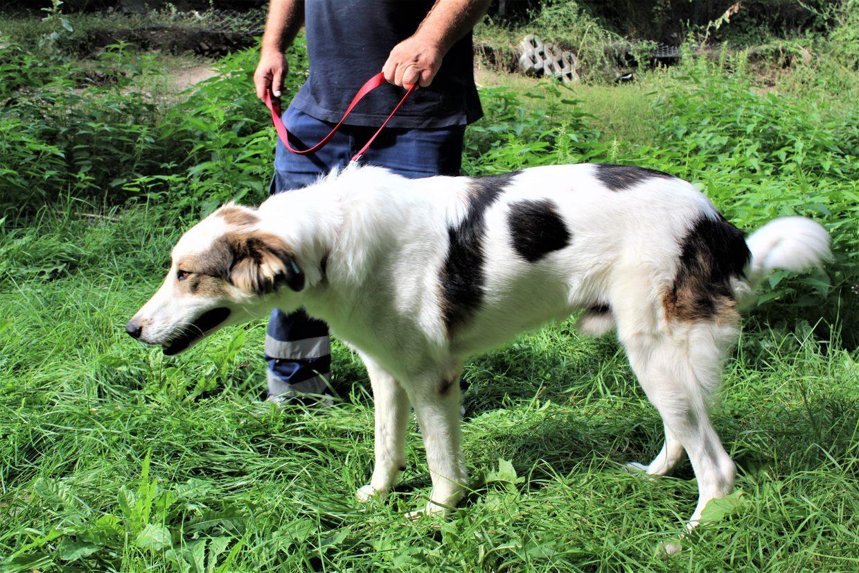 куче Елин