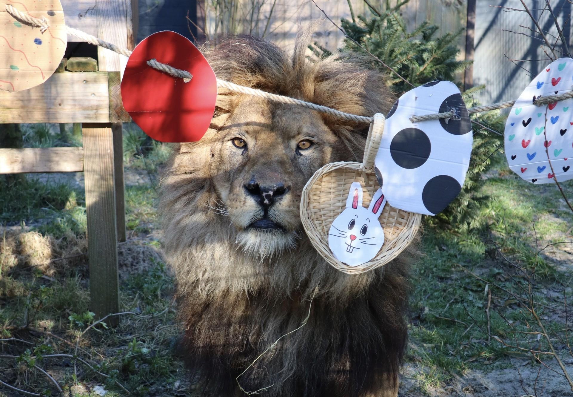 Bobby with his Easter enrichment