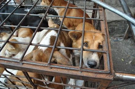 Honden in een kooi