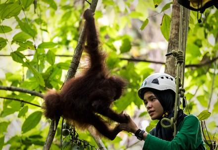 Orangutan and caregiver